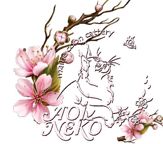 Aoi Neko Maine Coons
